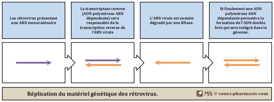 Réplication du génome des rétrovirus